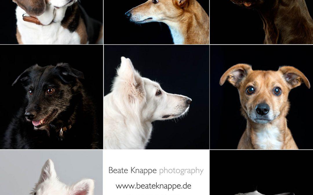 Hunde – ja, ich habe auch schon Hunde portraitiert